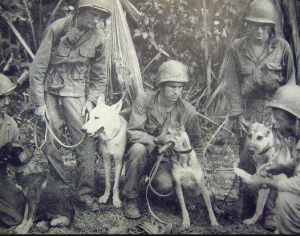1945-dog-patrols-luzon